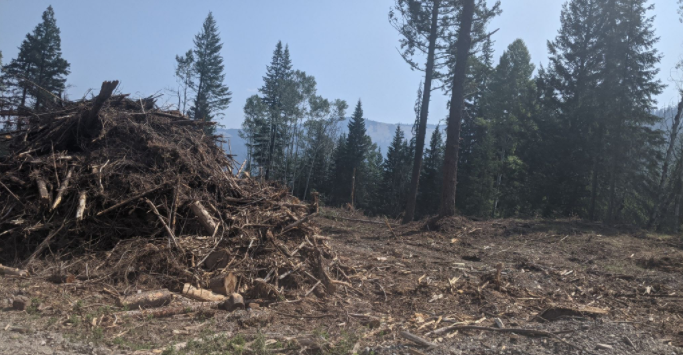 Wildfires, Climate Change, and Management of BC's Forests